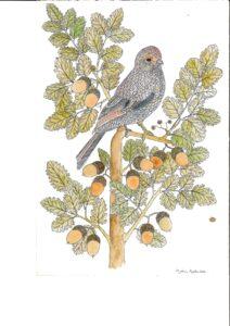 Ghiandaia su ramo di quercia 2008 (25x17,5)